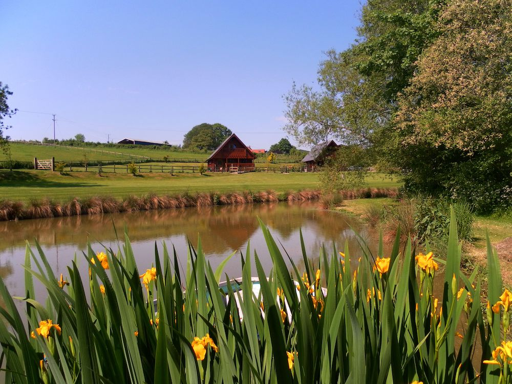 perfect fishing lake in the heart of dorset